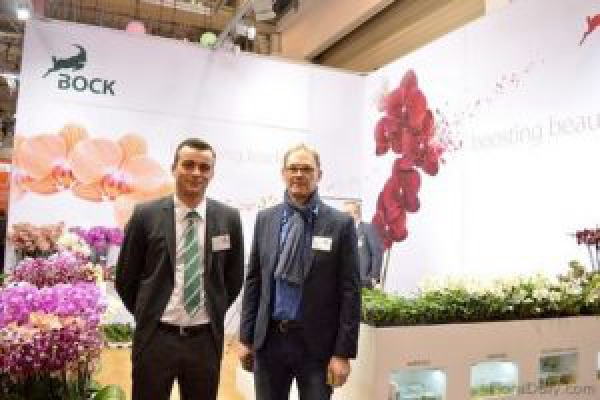 Europe: Fluctuating hellebore market explained